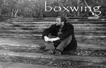 Boxwing