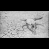 Video - 1935