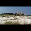 Video - Surrender