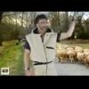 Video - Gang de Moutons