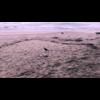 Video - Compassion