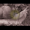 Video - Snail´s pace