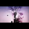 Video - The Dream (Instrumental Version)
