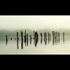 Video - Wolf Dawn