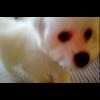 Video - Dozer 1