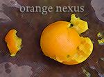 Orange Nexus