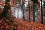 Autumns Calling