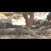 Video - Enchanted Kingdom